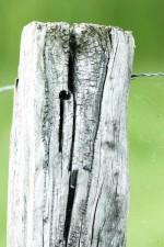 vieux, bois, clôture, les détails, l'image