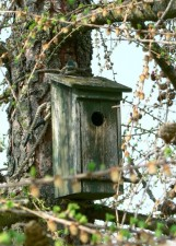 old, wooden, nesting, box