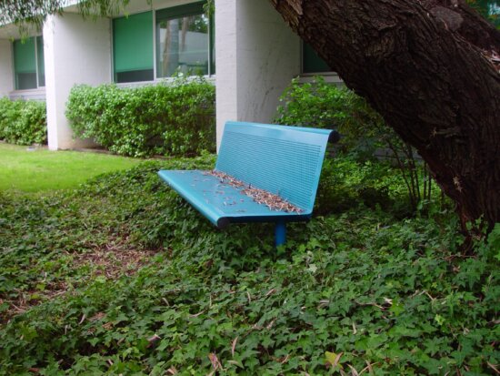 secluded, bench
