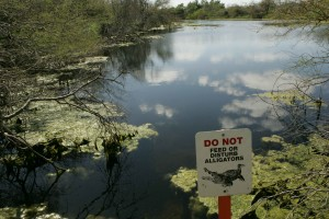 alligator, Warnung, Zeichen