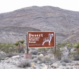 désert, désert, refuge, signe