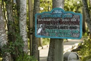 scuppernong, river, interpretive, boardwalk, pocosin, lakes, partnership, sounds
