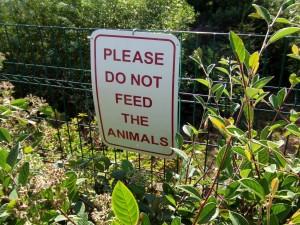 signer, conseiller, aliments pour animaux, les animaux