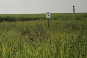 znamení, vysoká, zelená, tráva