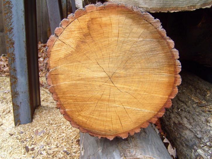 splinter, wood
