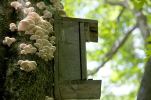 squirrel, nest, box, hanging, tree