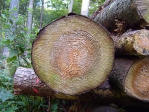 나무, 디스크, cutted, 트렁크