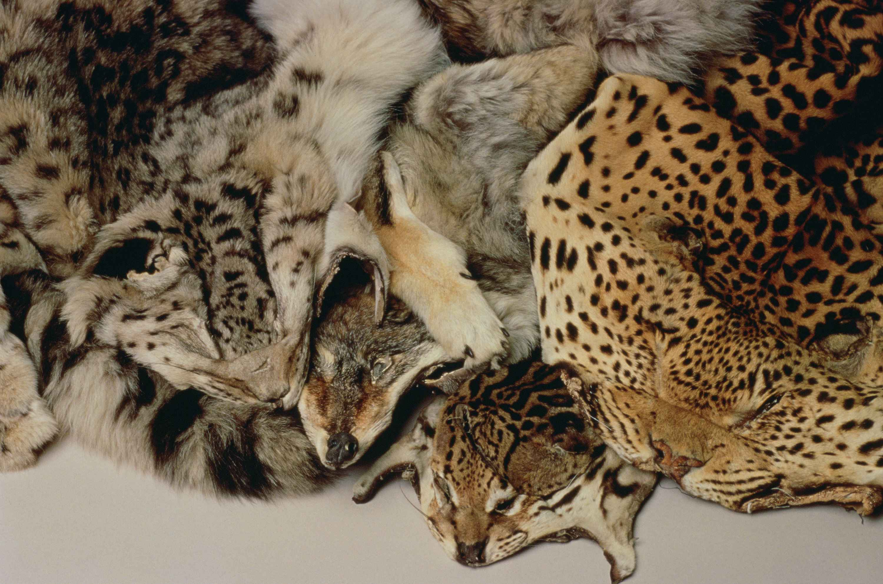 Various skin of wild animals royalty free stock picture