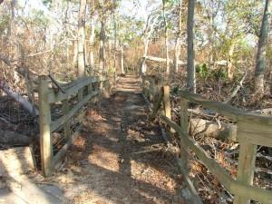 bois, crête, clôture, forêt