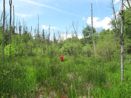 person, walks, woods, thick, grass