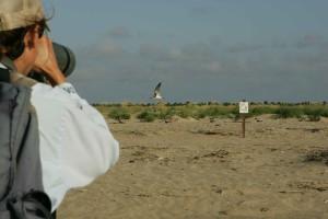 professionnel, photographe, appareil photo, capture, oiseau, vol