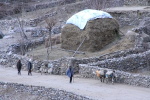 Afghanistan, men, donkeys, carry, goods, supplies, countryside