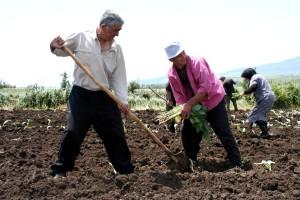 landbruket, programmer, Georgia, hjelpe, forbedre, bønder, beskjære, produksjon