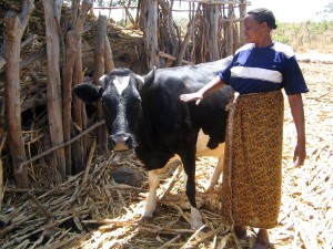 Americká, zemědělci, Machakos, Keňa, půjčování, ruční, keňský, zemědělci, zdroje