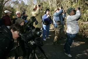 birdwatchers enjoying, favorite pastime, pleasure