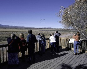 birdwatchers, deck, observe, birds, binoculars, cameras