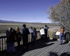 birdwatchers, deck, observe, birds, binoculars, cameras