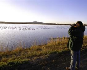 birdwatching, bosque, désert, refuge