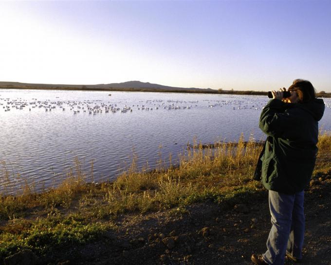 birdwatching, bosque, wilderness, refuge