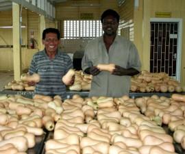 Butternut squash vokst, moderne, drivhus, teknologi, forberedt, eksportere