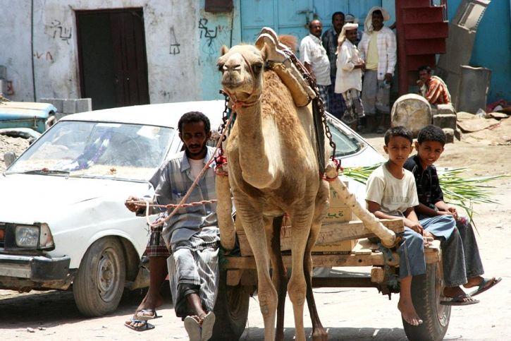 chameau, panier, la livraison, les matériaux, le Yémen