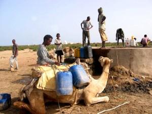 chameau, agenouille, avant, bien, contaminé, animal, déchets, Ebremi