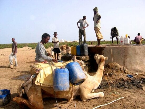 camel, kneels, front, well, contaminated, animal, waste, Ebremi