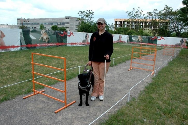 certified, instructor, seeing, eye, guide, dogs, blind, trains, one, labradors, school