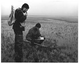 checking, tundra, bird, nest, measuring, tools