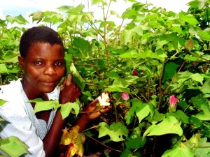 10Th, grade, student, cotton, farmer, shows, cotton, Kachenga, Malawi