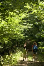 boy, girl, hiking, sunlit, path, woods, walking, sticks, backpack