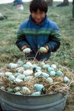 garçon, tient, les œufs, les mains