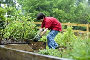 garçon, plantation, légumes, jardin