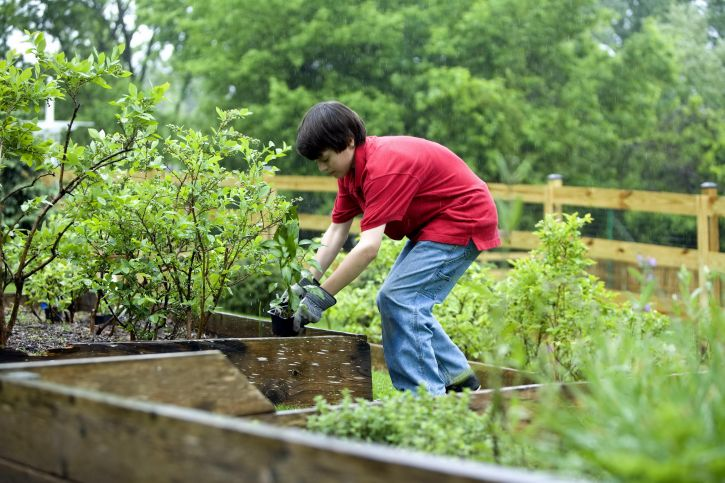 Free picture boy planting vegetables garden for Planting a garden