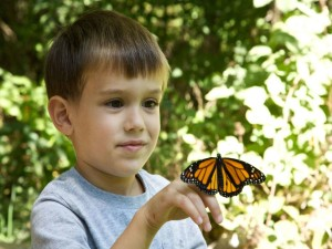 enfant, garçon, visage, papillon