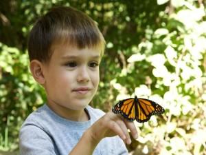 criança, menino, rosto, borboleta