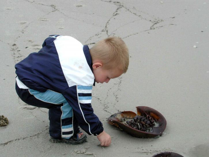 Kind, spielen, Hufeisen, Krabben