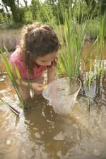 child, standing, water, looking, net