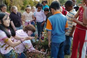 ohjeet, lapset, schooyard, puiden, kasvien, opettaja