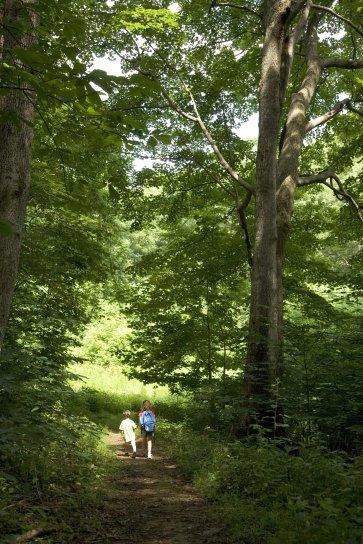 enfants, randonnée, bois
