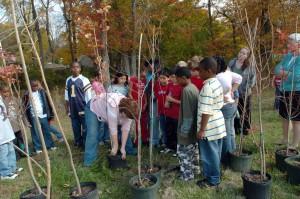 djeca, uče, mladi, stabla, kante, sadnja
