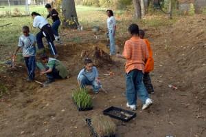 enfants, préparer, plante, plantes