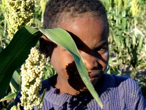 up-close, face, young boy, hides, shyly, sorghum, plant, field
