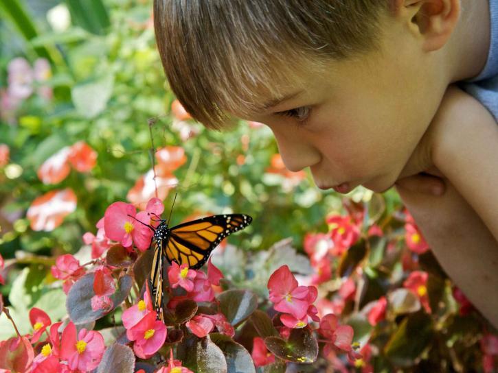 cute, boy, face, butterfly