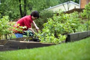 roztomilý, mladý chlapec, záhradníctvo, home, backyard