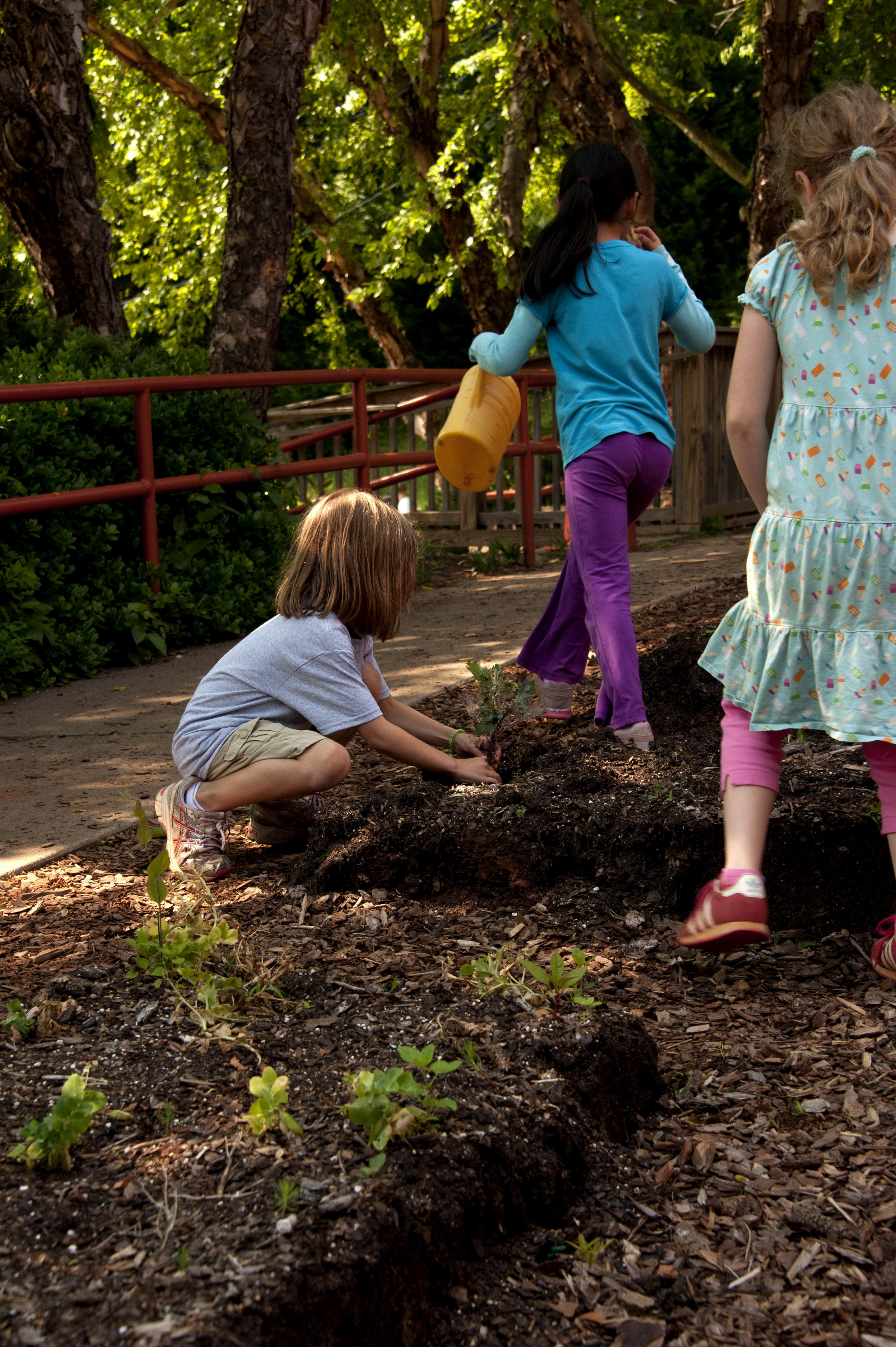 Free picture: gardening, cute, child