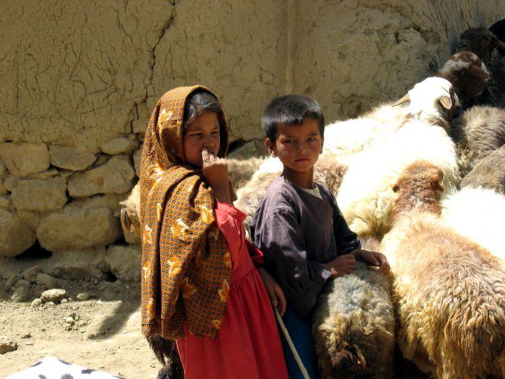goat, farming, Afghanistan