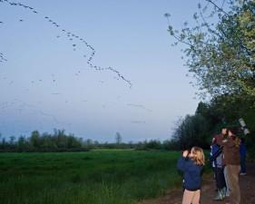 group, girl, scouts, enjoying, birdwatching