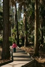 little, girl, tall, trees, boardwalk