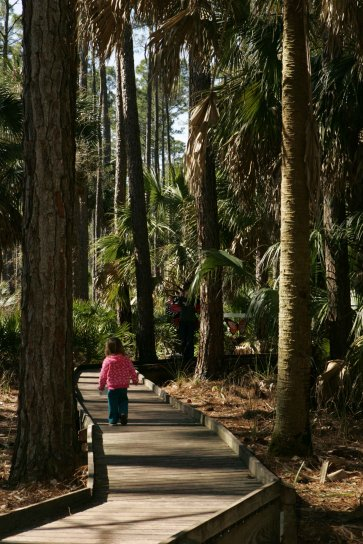 little, girl, tall, trees, boardwalk